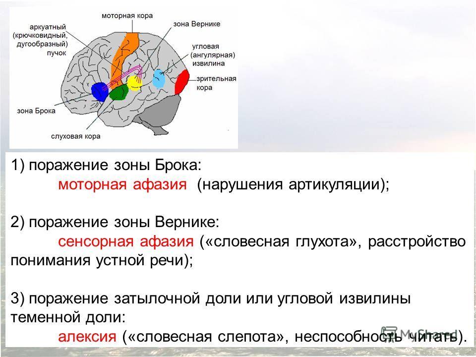 1) поражение зоны Брока: моторная афазия (нарушения артикуляции); 2) поражение зоны Вернике: сенсорная афазия («словесная глухота», расстройство понимания устной речи); 3) поражение затылочной доли или угловой извилины теменной доли: алексия («словес