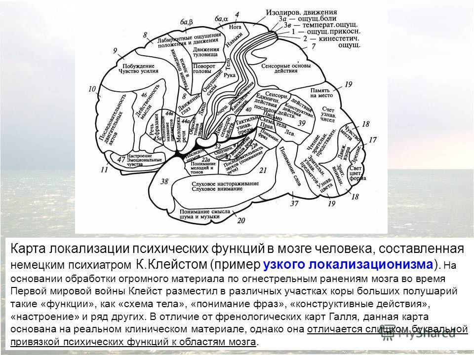 Карта локализации психических функций в мозге человека, составленная немецким психиатром К.Клейстом (пример узкого локализационизма). На основании обработки огромного материала по огнестрельным ранениям мозга во время Первой мировой войны Клейст разм