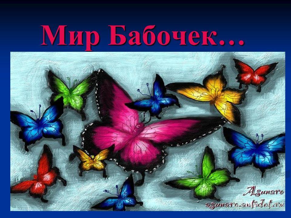 Мир Бабочек…