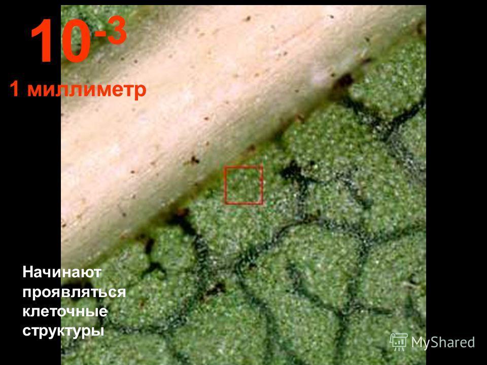 С такого расстояния можно рассмотреть структуру листа. 10 -2 1 сантиметр