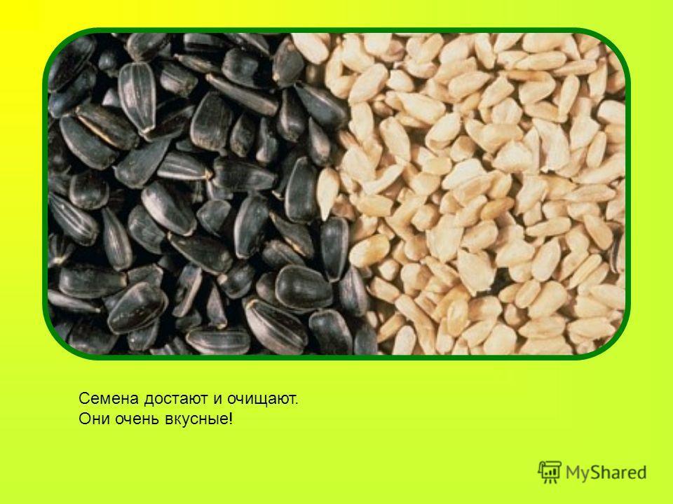 Семена достают и очищают. Они очень вкусные!