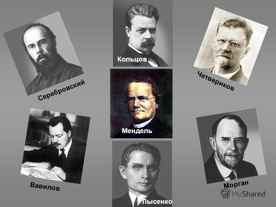 Серебровский Кольцов Четвериков Мендель Лысенко Вавилов Морган