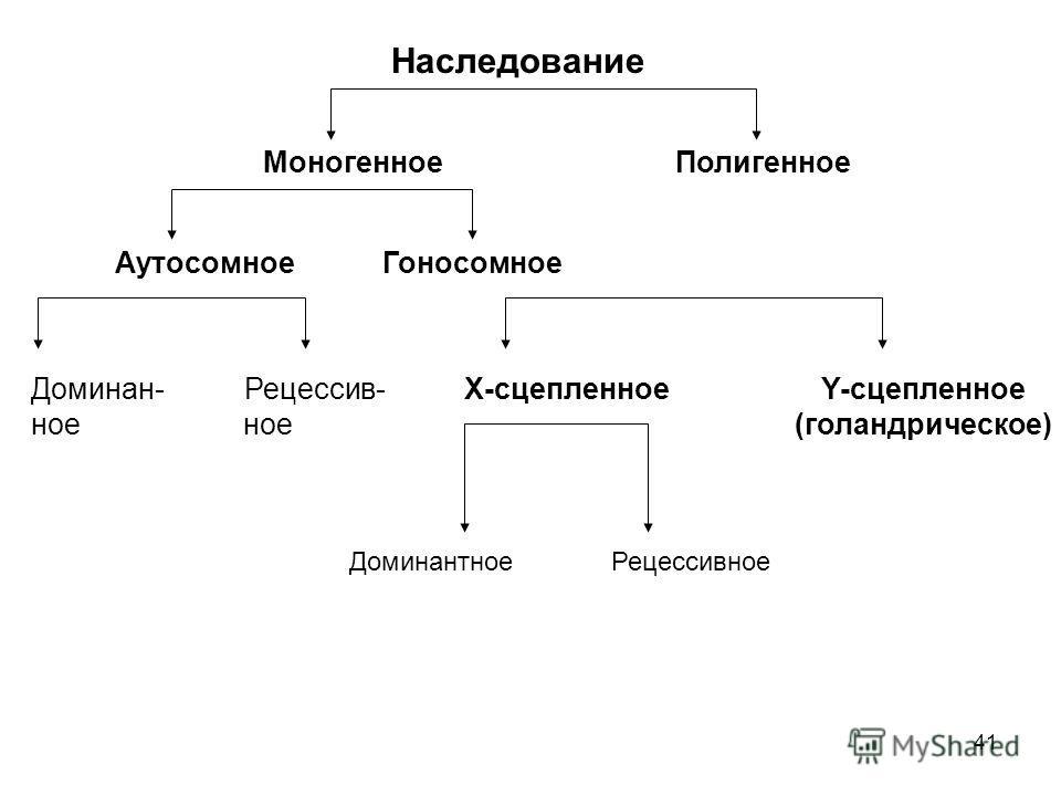 41 Наследование Моногенное Полигенное Аутосомное Гоносомное Доминан- Рецессив- Х-сцепленное Y-сцепленное ное ное (голандрическое) Доминантное Рецессивное