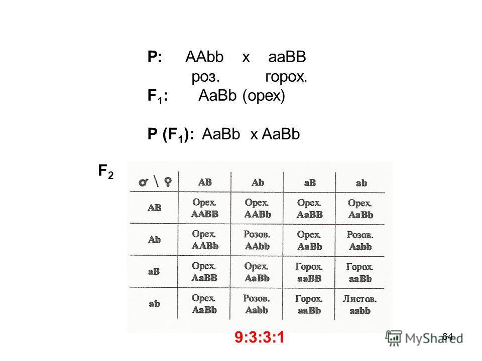 64 Р: ААbb x aaBB роз. горох. F 1 : AaBb (орех) P (F 1 ): AaBb x AaBb F2F2 9:3:3:1