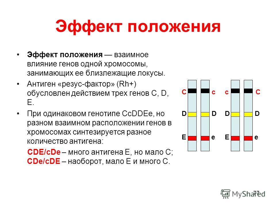 77 Эффект положения Эффект положения взаимное влияние генов одной хромосомы, занимающих ее близлежащие локусы. Антиген «резус-фактор» (Rh+) обусловлен действием трех генов C, D, E. При одинаковом генотипе CcDDEe, но разном взаимном расположении генов