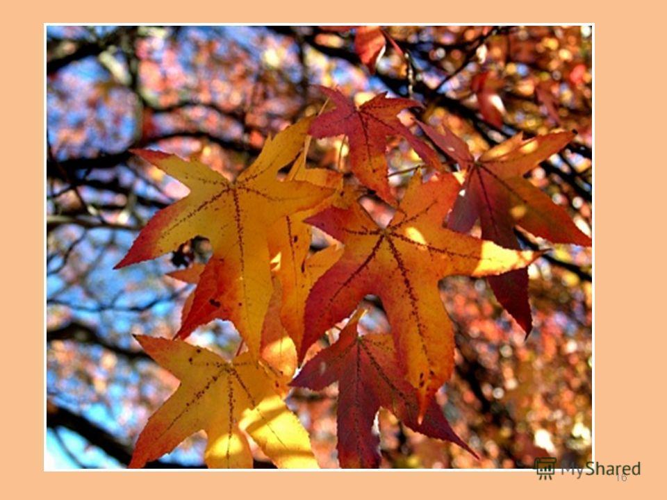 Листопад – естественное отделение листьев от стебля при их отмирании. Значение листопада: защита от иссушения; защита от обламывания ветвей. Веткопад. 15