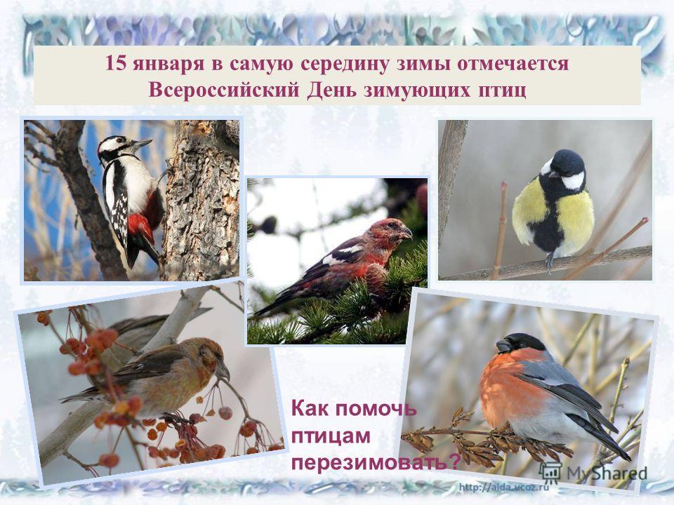 15 января в самую середину зимы отмечается Всероссийский День зимующих птиц 25.11.20132 Как помочь птицам перезимовать?