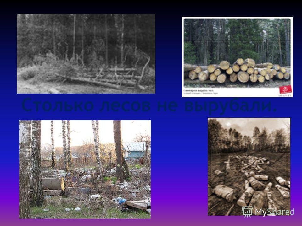 Столько лесов не вырубали.