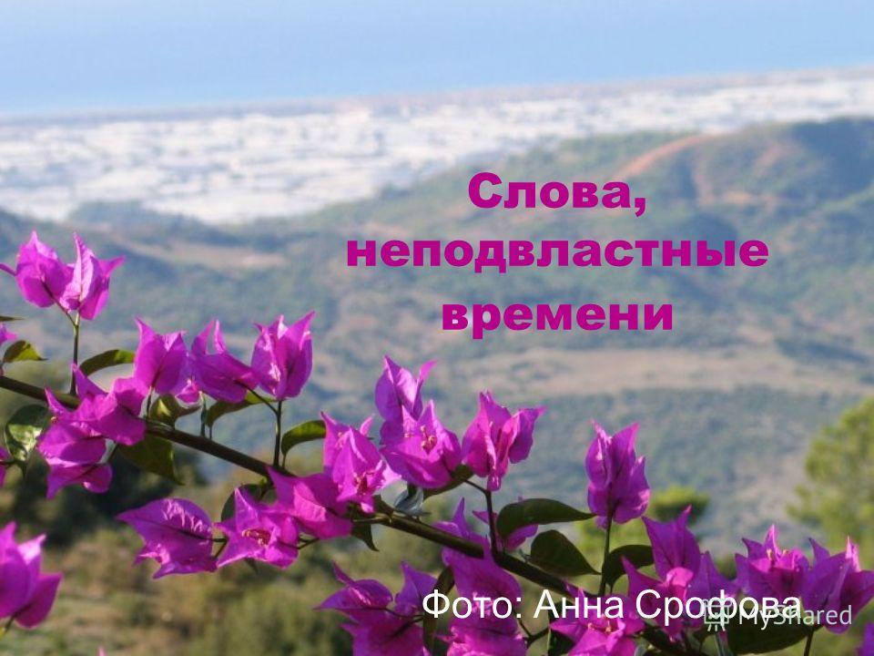 Слова, неподвластные времени Фото: Анна Срофова