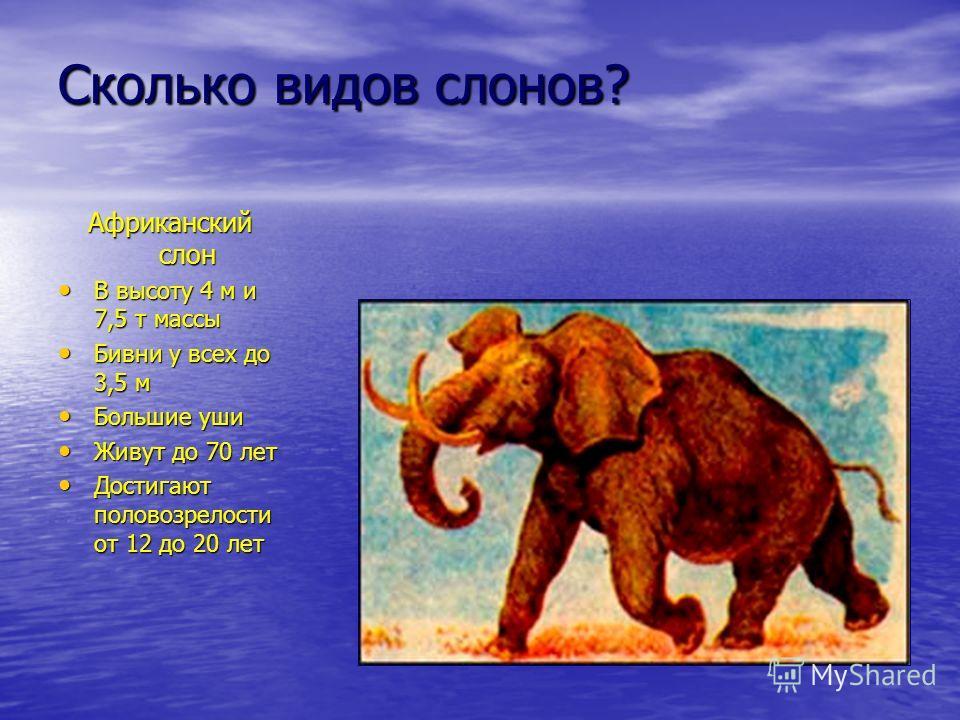 Сколько видов слонов? Африканский слон В высоту 4 м и 7,5 т массы В высоту 4 м и 7,5 т массы Бивни у всех до 3,5 м Бивни у всех до 3,5 м Большие уши Большие уши Живут до 70 лет Живут до 70 лет Достигают половозрелости от 12 до 20 лет Достигают полово