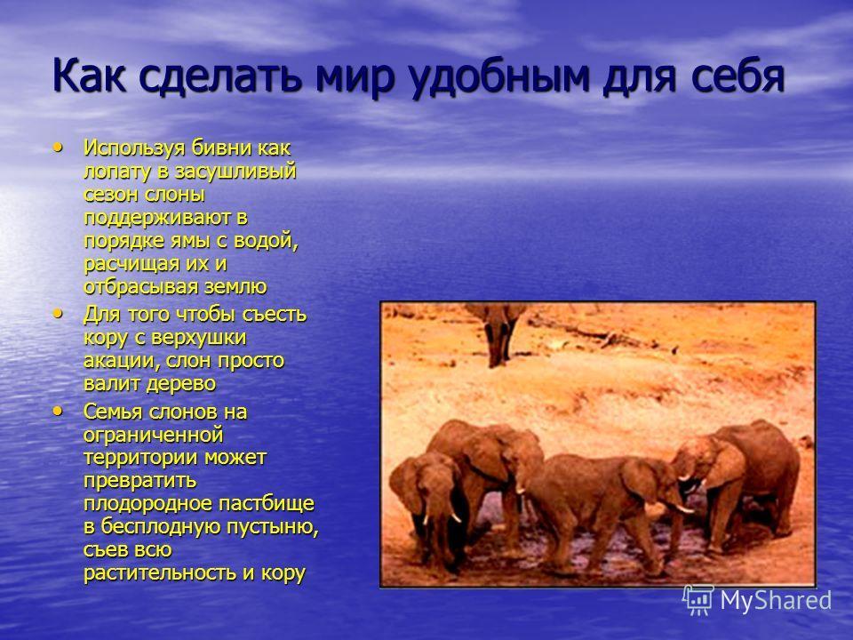 Как сделать мир удобным для себя Используя бивни как лопату в засушливый сезон слоны поддерживают в порядке ямы с водой, расчищая их и отбрасывая землю Используя бивни как лопату в засушливый сезон слоны поддерживают в порядке ямы с водой, расчищая и