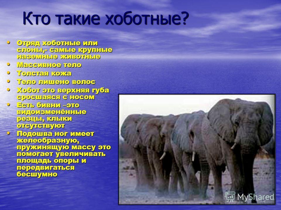 Кто такие хоботные? Кто такие хоботные? Отряд хоботные или слоны,- самые крупные наземные животные Отряд хоботные или слоны,- самые крупные наземные животные Массивное тело Массивное тело Толстая кожа Толстая кожа Тело лишено волос Тело лишено волос