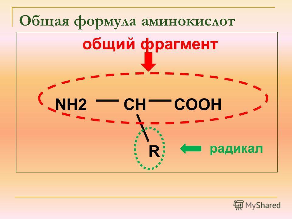 NH2 CH COOH R общий фрагмент радикал Общая формула аминокислот