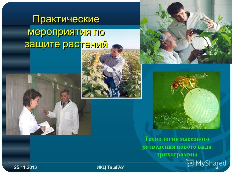 Практические мероприятия по защите растений 25.11.20136ИКЦ ТашГАУ Технология массового разведения нового вида трихограммы