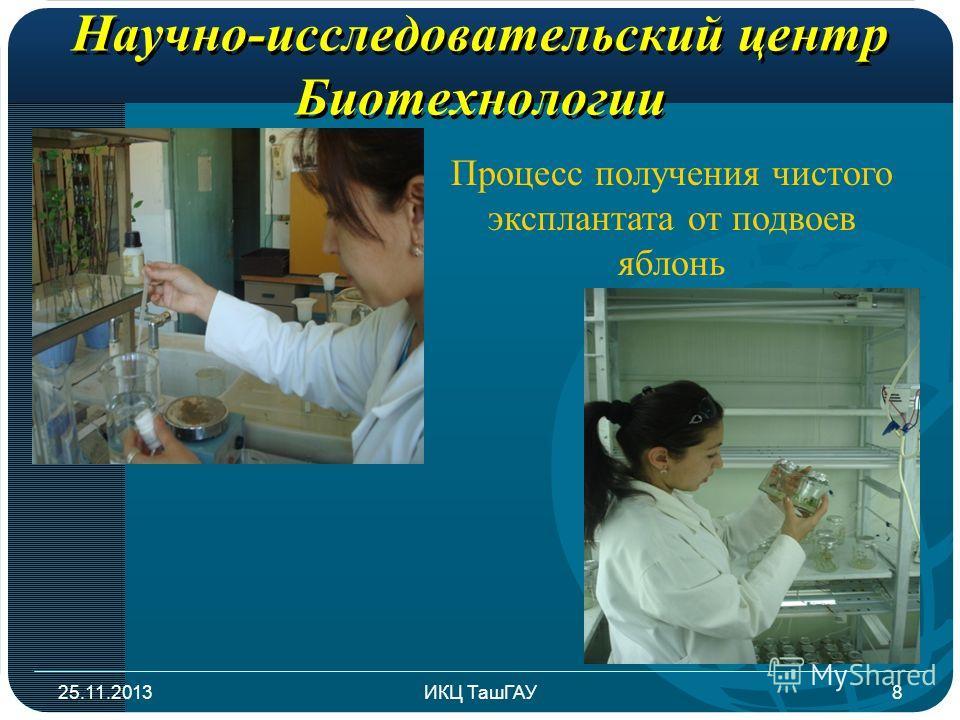 Научно-исследовательский центр Биотехнологии 25.11.2013ИКЦ ТашГАУ8 Процесс получения чистого эксплантата от подвоев яблонь