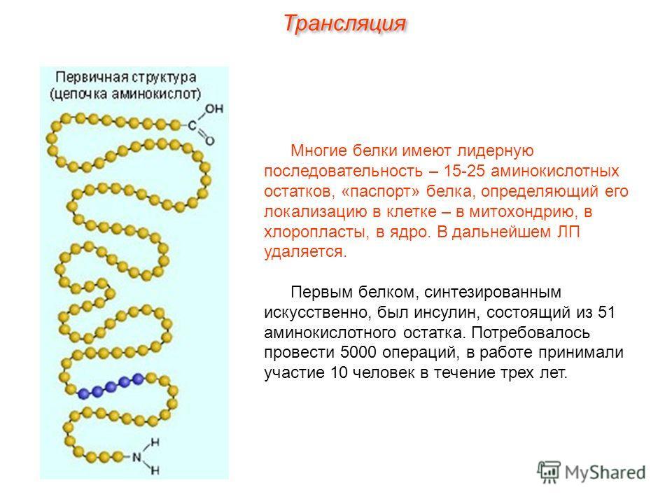 Многие белки имеют лидерную последовательность – 15-25 аминокислотных остатков, «паспорт» белка, определяющий его локализацию в клетке – в митохондрию, в хлоропласты, в ядро. В дальнейшем ЛП удаляется. Первым белком, синтезированным искусственно, был