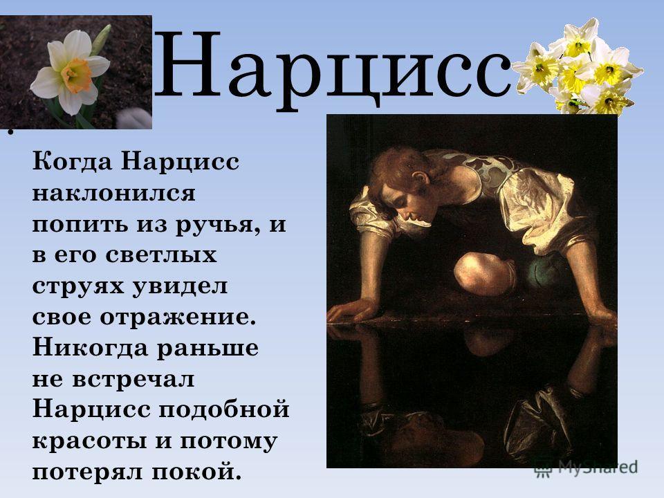 Нарцисс Когда Нарцисс наклонился попить из ручья, и в его светлых струях увидел свое отражение. Никогда раньше не встречал Нарцисс подобной красоты и потому потерял покой.