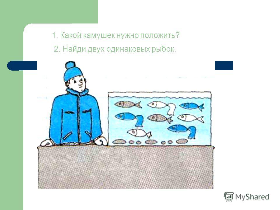 1. Какой камушек нужно положить? 2. Найди двух одинаковых рыбок.