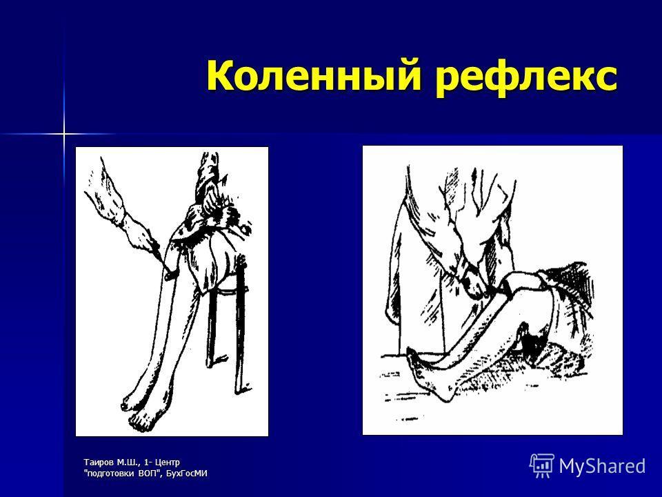 Таиров М.Ш., 1- Центр подготовки ВОП, БухГосМИ Коленный рефлекс