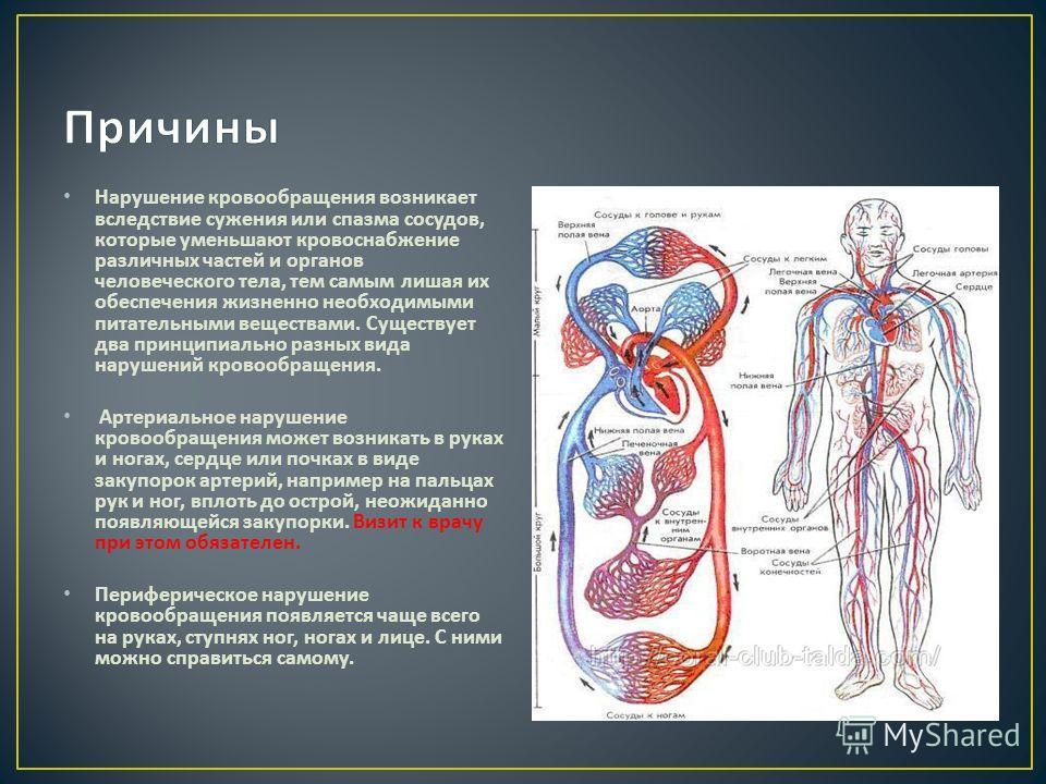 Нарушение кровообращения возникает вследствие сужения или спазма сосудов, которые уменьшают кровоснабжение различных частей и органов человеческого тела, тем самым лишая их обеспечения жизненно необходимыми питательными веществами. Существует два при