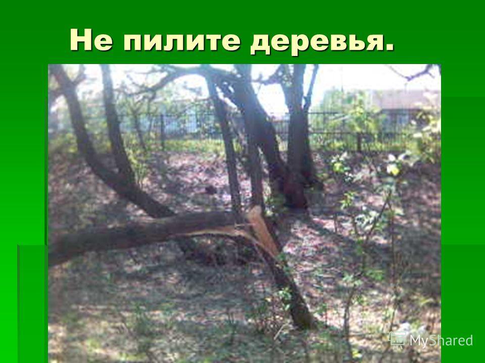 Не пилите деревья. Не пилите деревья.