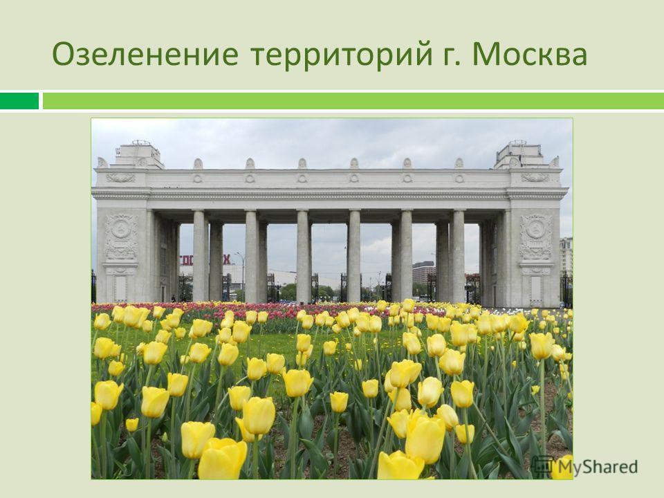 Озеленение территорий г. Москва