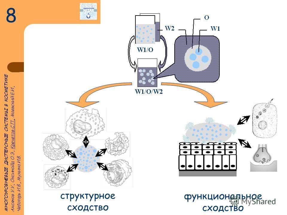 структурное сходство функциональное сходство 8