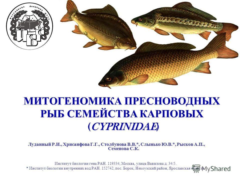 на что клюют рыбы семейства карповых