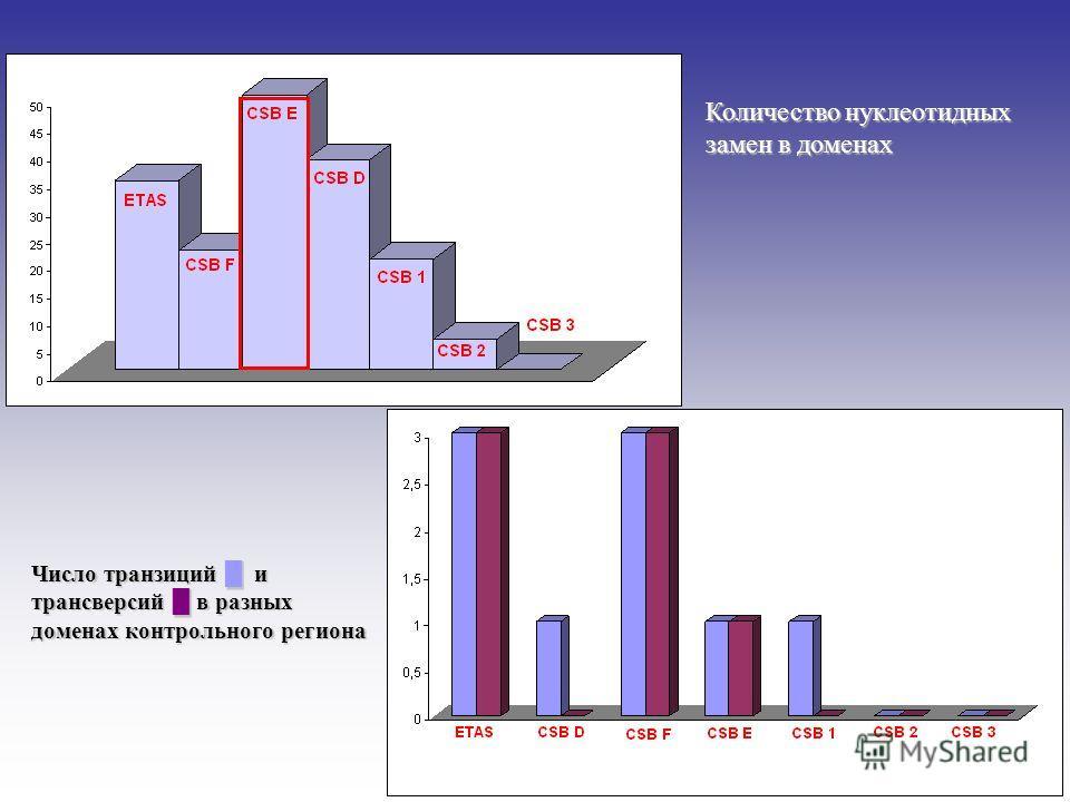 Количество нуклеотидных замен в доменах Число транзиций и трансверсий в разных доменах контрольного региона