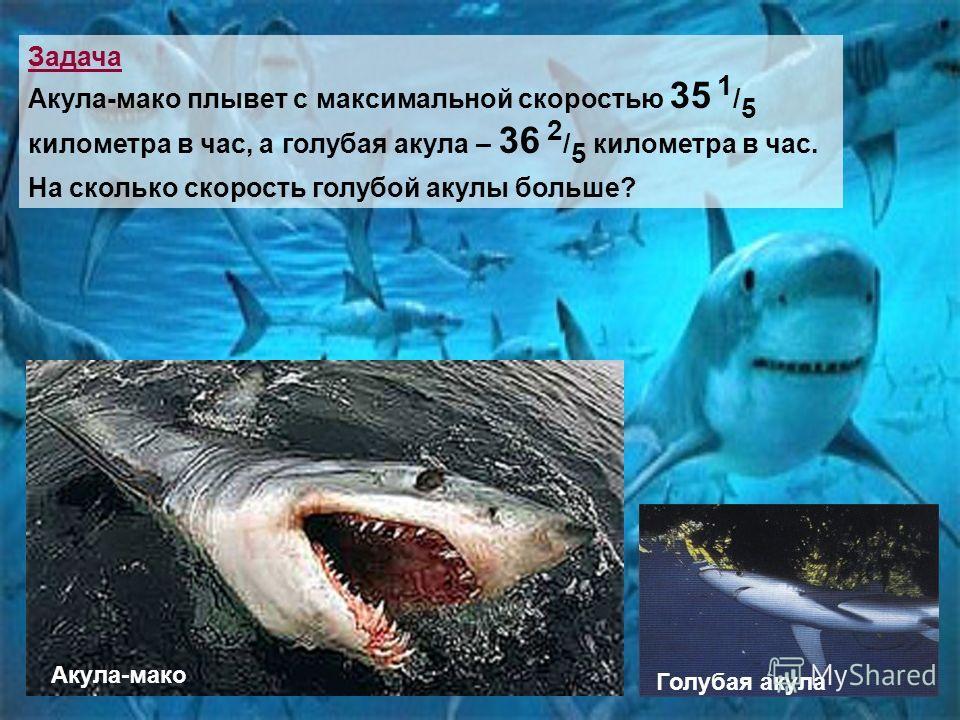 Задача Акула-мако плывет с максимальной скоростью 35 1 / 5 километра в час, а голубая акула – 36 2 / 5 километра в час. На сколько скорость голубой акулы больше? Акула-мако Голубая акула