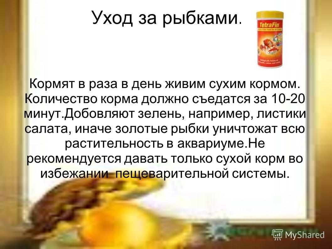 Уход за рыбками. Кормят в раза в день живим сухим кормом. Количество корма должно съедатся за 10-20 минут.Добовляют зелень, например, листики салата, иначе золотые рыбки уничтожат всю растительность в аквариуме.Не рекомендуется давать только сухой ко