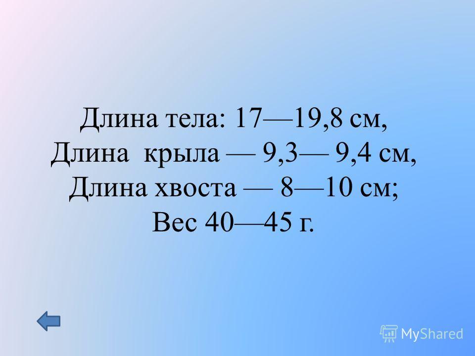 Длина тела: 1719,8 см, Длина крыла 9,3 9,4 см, Длина хвоста 810 см; Вес 4045 г.