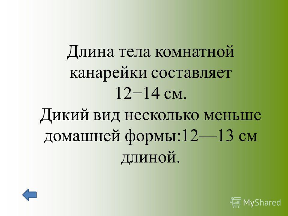 Длина тела комнатной канарейки составляет 1214 см. Дикий вид несколько меньше домашней формы:1213 см длиной.
