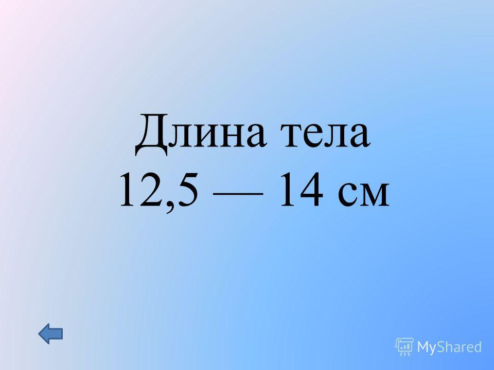 Длина тела 12,5 14 см