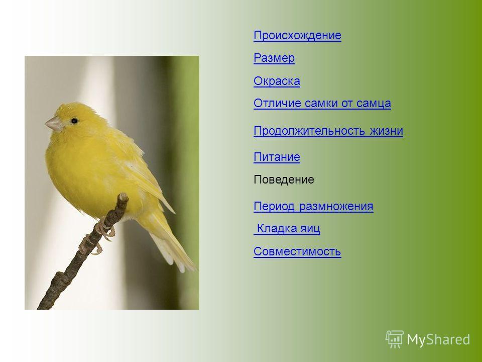 Происхождение Размер Окраска Отличие самки от самца Продолжительность жизни Питание Поведение Период размножения Кладка яиц Совместимость