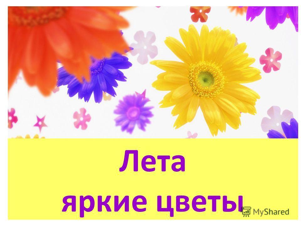 Лета яркие цветы