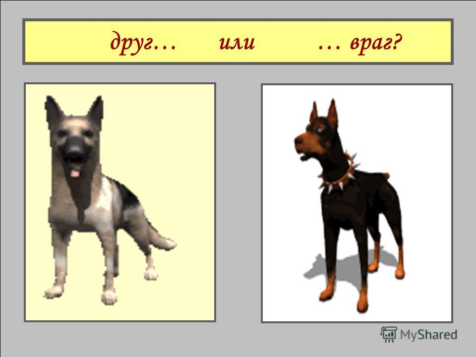 Собака ….