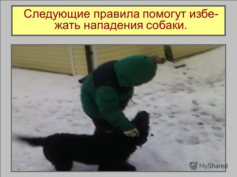 Южно- русская овчарка