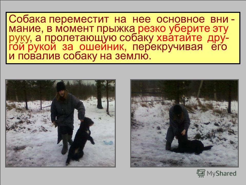 6.Если бегущая на вас собака в ошей- нике – выбросите в сторону руку.