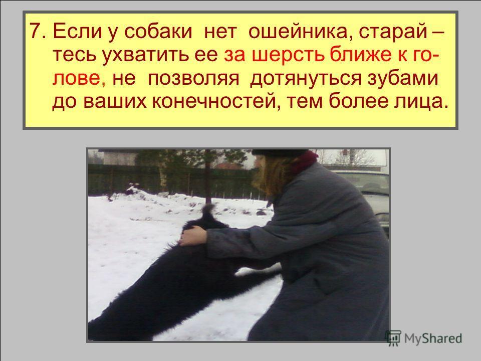 Собака переместит на нее основное вни - мание, в момент прыжка резко уберите эту руку, а пролетающую собаку хватайте дру- гой рукой за ошейник, перекручивая его и повалив собаку на землю.