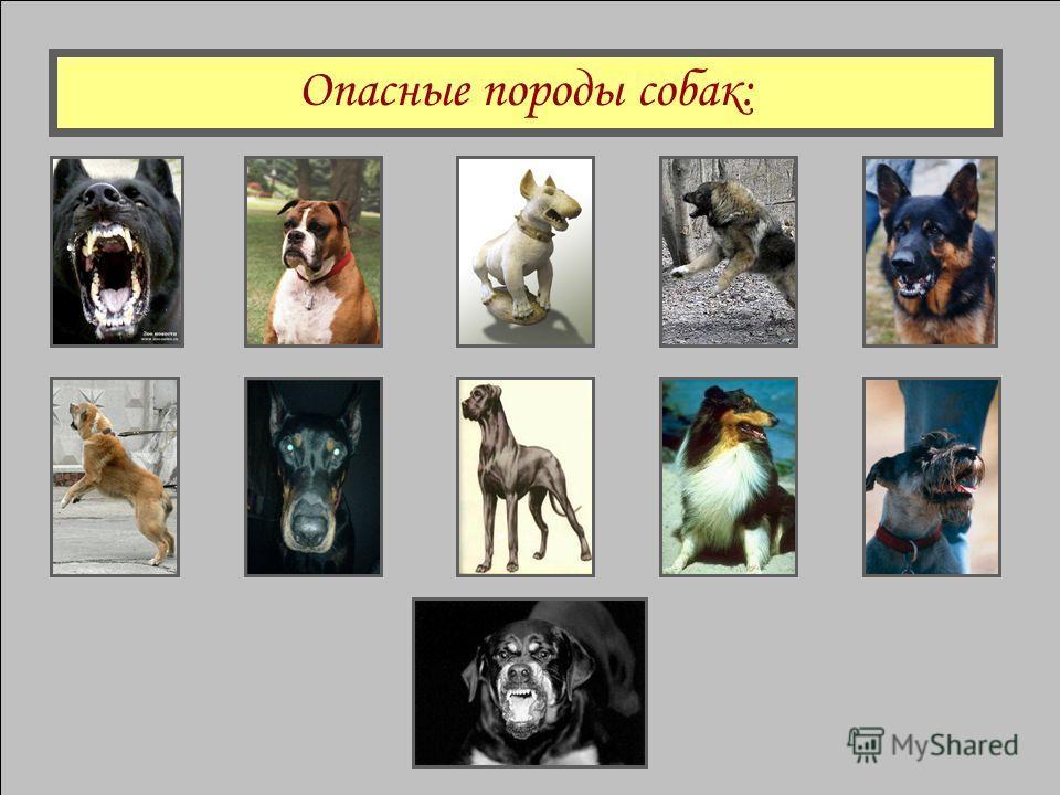 Серьезную угрозу для человека пред- ставляют 11 пород собак. Проведенные исследования показали: