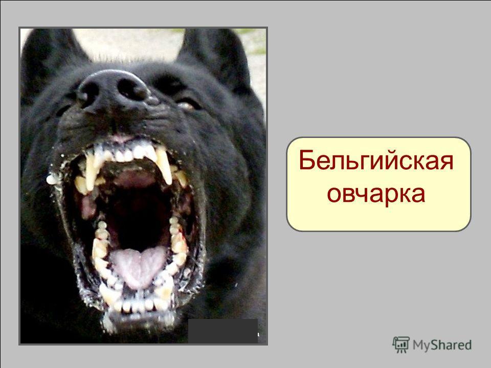 Опасные породы собак: