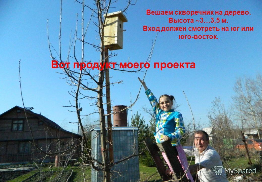 Вешаем скворечник на дерево. Высота ~3…3,5 м. Вход должен смотреть на юг или юго - восток. Вот продукт моего проекта