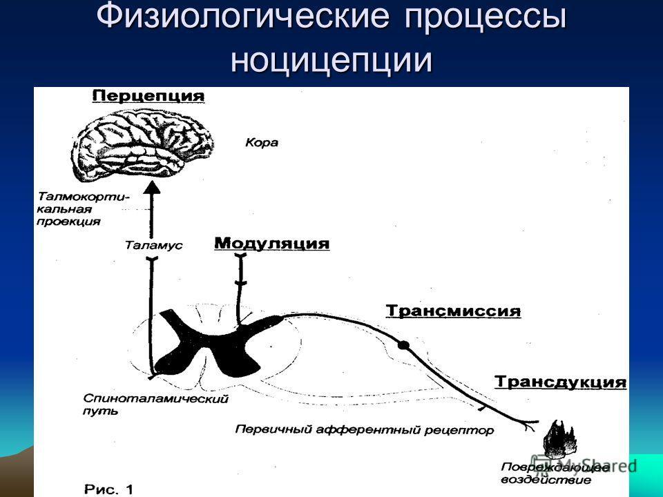 Физиологические процессы ноцицепции