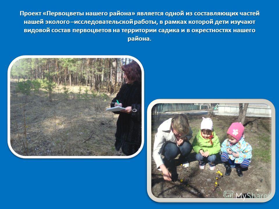 Проект «Первоцветы нашего района» является одной из составляющих частей нашей эколого –исследовательской работы, в рамках которой дети изучают видовой состав первоцветов на территории садика и в окрестностях нашего района.
