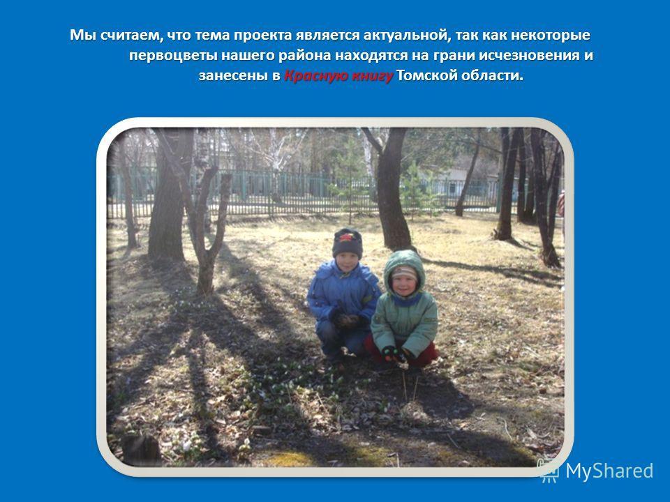 Мы считаем, что тема проекта является актуальной, так как некоторые первоцветы нашего района находятся на грани исчезновения и занесены в Красную книгу Томской области.
