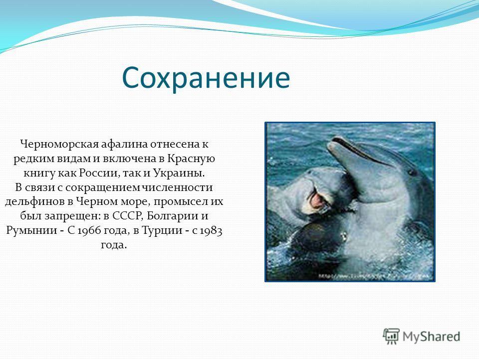 Черноморская афалина отнесена к редким видам и включена в Красную книгу как России, так и Украины. В связи с сокращением численности дельфинов в Черном море, промысел их был запрещен: в СССР, Болгарии и Румынии - С 1966 года, в Турции - с 1983 года.