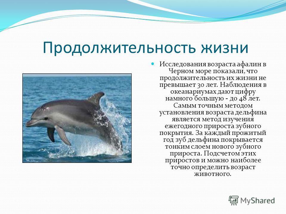 Продолжительность жизни Исследования возраста афалин в Черном море показали, что продолжительность их жизни не превышает 30 лет. Наблюдения в океанариумах дают цифру намного большую - до 48 лет. Самым точным методом установления возраста дельфина явл