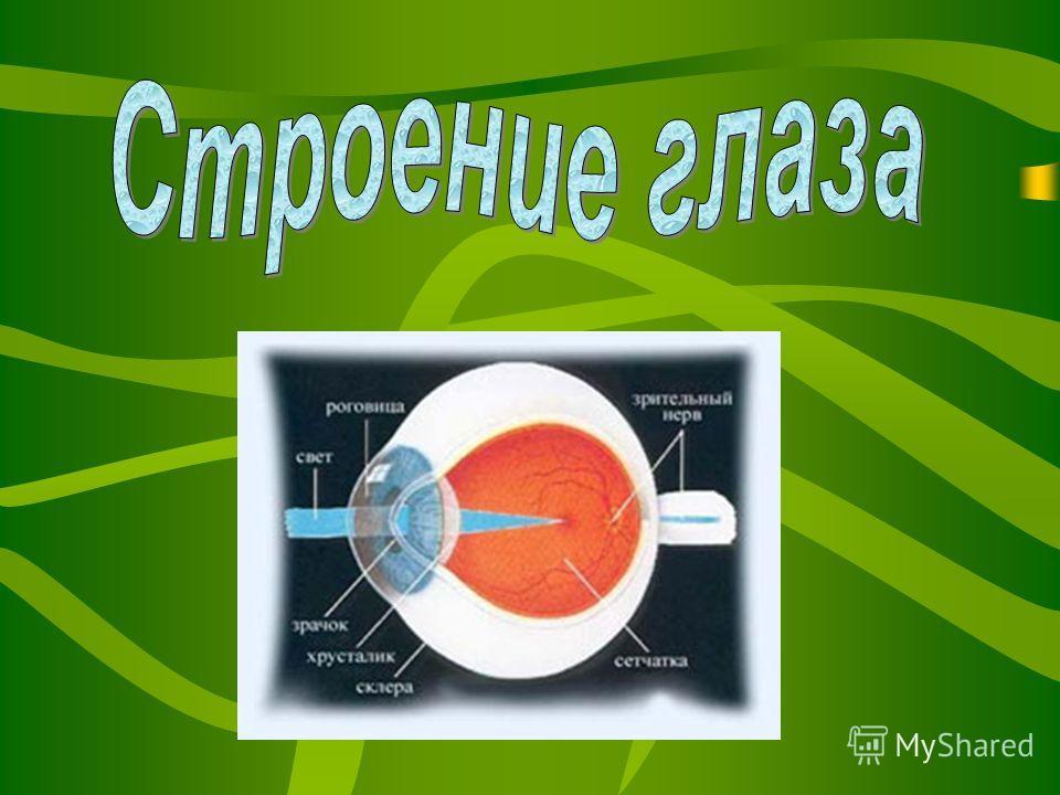 Для чего нужны глаза? Для чего нужны глаза? Почему глаза бывают разного цвета? Почему глаза бывают разного цвета? «Без глаз, как без рук?»- почему так говорят? «Без глаз, как без рук?»- почему так говорят? Какова роль зрения в жизни человека? Какова