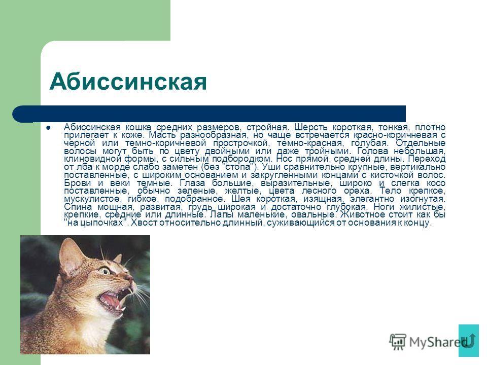 Абиссинская Абиссинская кошка средних размеров, стройная. Шерсть короткая, тонкая, плотно прилегает к коже. Масть разнообразная, но чаще встречается красно-коричневая с черной или темно-коричневой прострочкой, темно-красная, голубая. Отдельные волосы